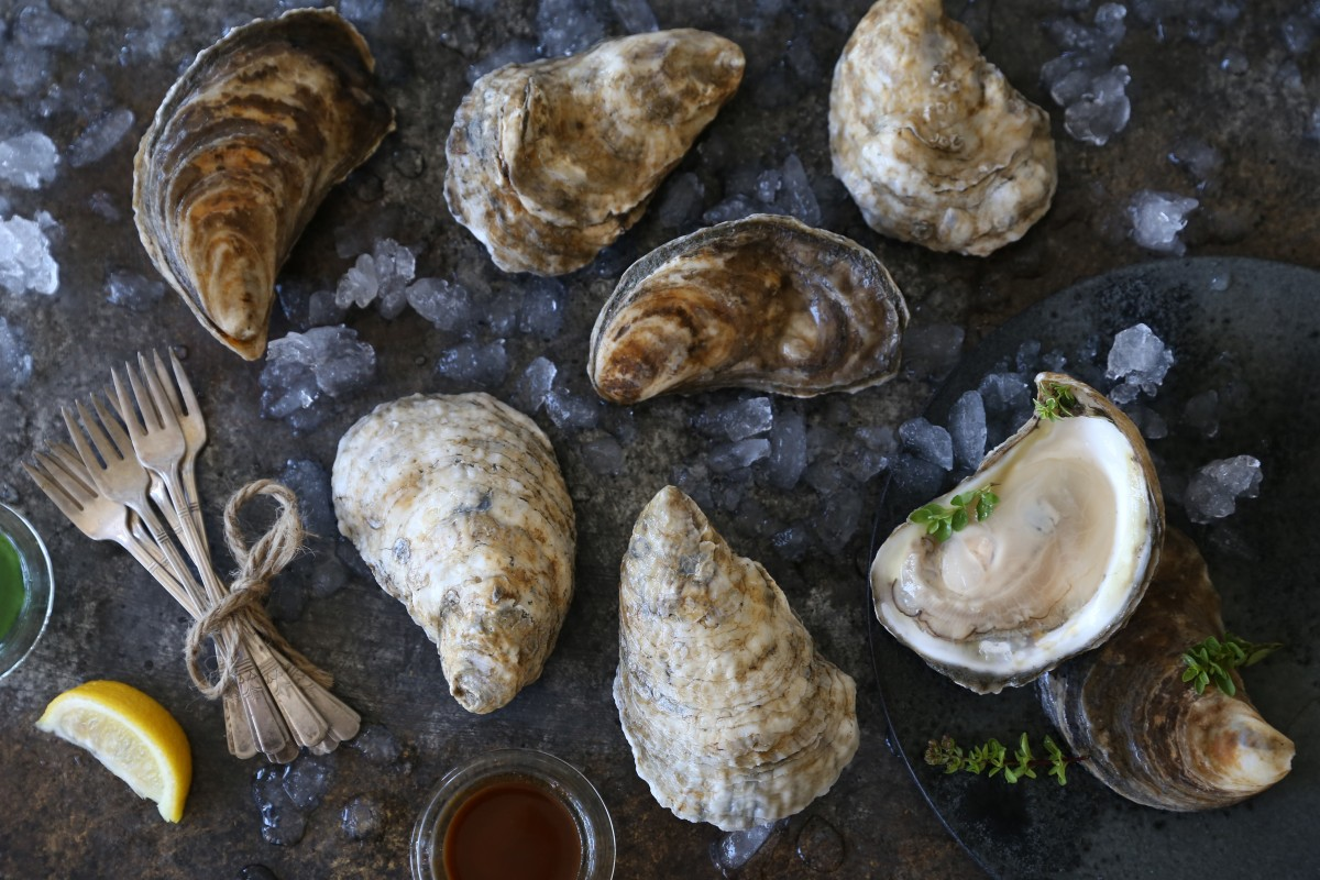 National Oyster Day!